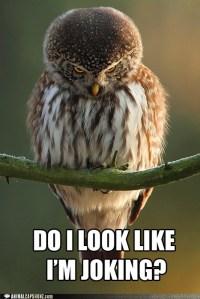 PARAMEDIC BIRD NO JOKE